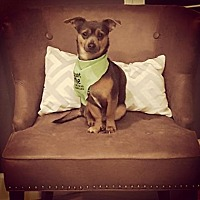 Adopt A Pet :: Pierce - Scottsdale, AZ