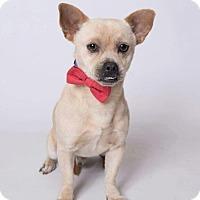 Adopt A Pet :: Frodo - Kenner, LA