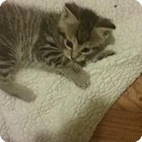 Adopt A Pet :: Lb Litter - Mikan - APPLICATIONS CLOSED - Livonia, MI