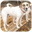 Photo 2 - Foxhound Mix Dog for adoption in Richmond, Virginia - Sweet Pea