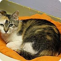 Adopt A Pet :: Sonoma - Chicago, IL