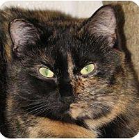 Domestic Mediumhair Cat for adoption in Woodstock, Illinois - Jaspur