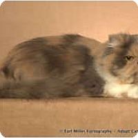 Adopt A Pet :: Erin - Beverly Hills, CA