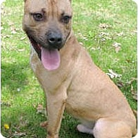 Adopt A Pet :: Solomon - Chicago, IL