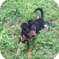 Adopt A Pet :: Peanut MP - Glastonbury, CT