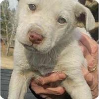 Adopt A Pet :: Aspen - Braintree, MA