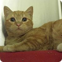 Adopt A Pet :: Julianne Moore - Richboro, PA
