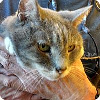 Adopt A Pet :: Fancy - Scottsdale, AZ