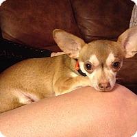 Adopt A Pet :: Brutus - Scottsdale, AZ