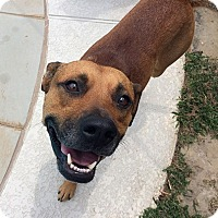 Adopt A Pet :: Justice - Plano, TX