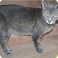 Adopt A Pet :: Shayna - Edmonton, AB