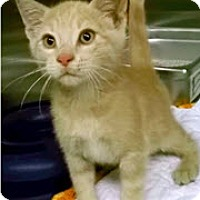 Adopt A Pet :: Quincy - Edmonton, AB
