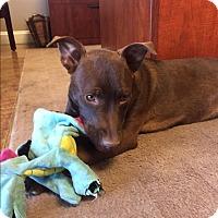 Adopt A Pet :: Abbey - Homewood, AL