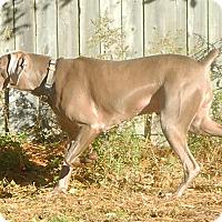Adopt A Pet :: Boston - Grand Haven, MI