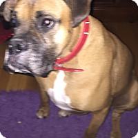 Adopt A Pet :: Busta - Montreal, QC