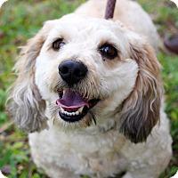 Adopt A Pet :: Marley - Orlando, FL
