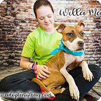 Adopt A Pet :: Willa Mae - Newport, KY