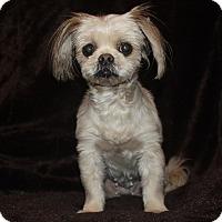 Adopt A Pet :: Paige - Henderson, NV