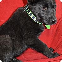 Adopt A Pet :: Zeus - Westport, CT