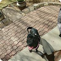 Adopt A Pet :: Vidalia - Evergreen, CO