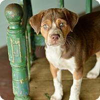 Adopt A Pet :: Isabel - San Antonio, TX