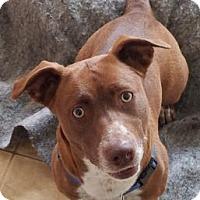 Adopt A Pet :: Alaska - Santa Cruz, CA