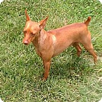 Adopt A Pet :: Dillon - Nashville, TN