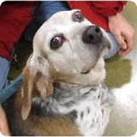 Adopt A Pet :: Lois - Courtesy - Indianapolis, IN
