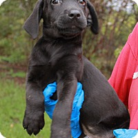 Adopt A Pet :: Randy - Southington, CT