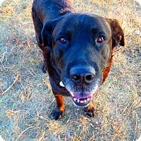 Adopt A Pet :: URGENT!! - Rocky - Caledon, ON