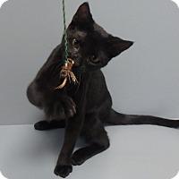 Adopt A Pet :: Gomez - Seguin, TX