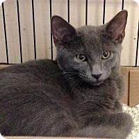 Adopt A Pet :: Abel - East Brunswick, NJ