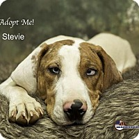 Adopt A Pet :: Stevie - Acton, CA