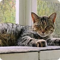 Adopt A Pet :: Maura - Victor, NY