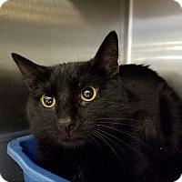 Adopt A Pet :: Sammy - Elyria, OH