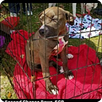 Adopt A Pet :: ALLIE - Crowley, LA