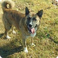 Adopt A Pet :: Cosmos - Greeneville, TN
