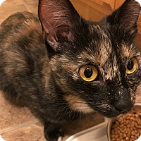 Adopt A Pet :: Liana Lee - Crown Point, IN