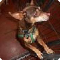 Adopt A Pet :: Cosmo - Tehachapi, CA