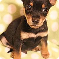 Adopt A Pet :: Ricky - Wytheville, VA