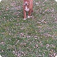 Adopt A Pet :: Maggie - Roaring Spring, PA