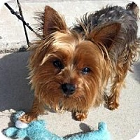 Adopt A Pet :: Charlie - Southern Pines, NC