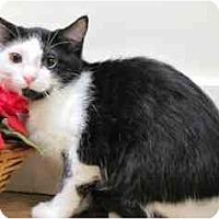 Adopt A Pet :: Miss Spookey - Milwaukee, WI