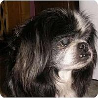 Adopt A Pet :: Hudson-VA - Suffolk, VA
