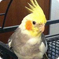 Adopt A Pet :: Florian - Lenexa, KS