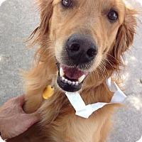Adopt A Pet :: *Red - PENDING - Westport, CT