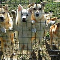 Golden Retriever Mix Dog for adoption in Poland, Indiana - Ellen