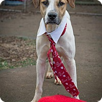 Adopt A Pet :: Highway - Knoxville, TN