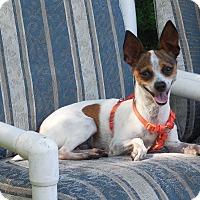 Adopt A Pet :: Apatchi - Ormond Beach, FL