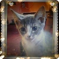 Adopt A Pet :: Angelina Love - Trevose, PA